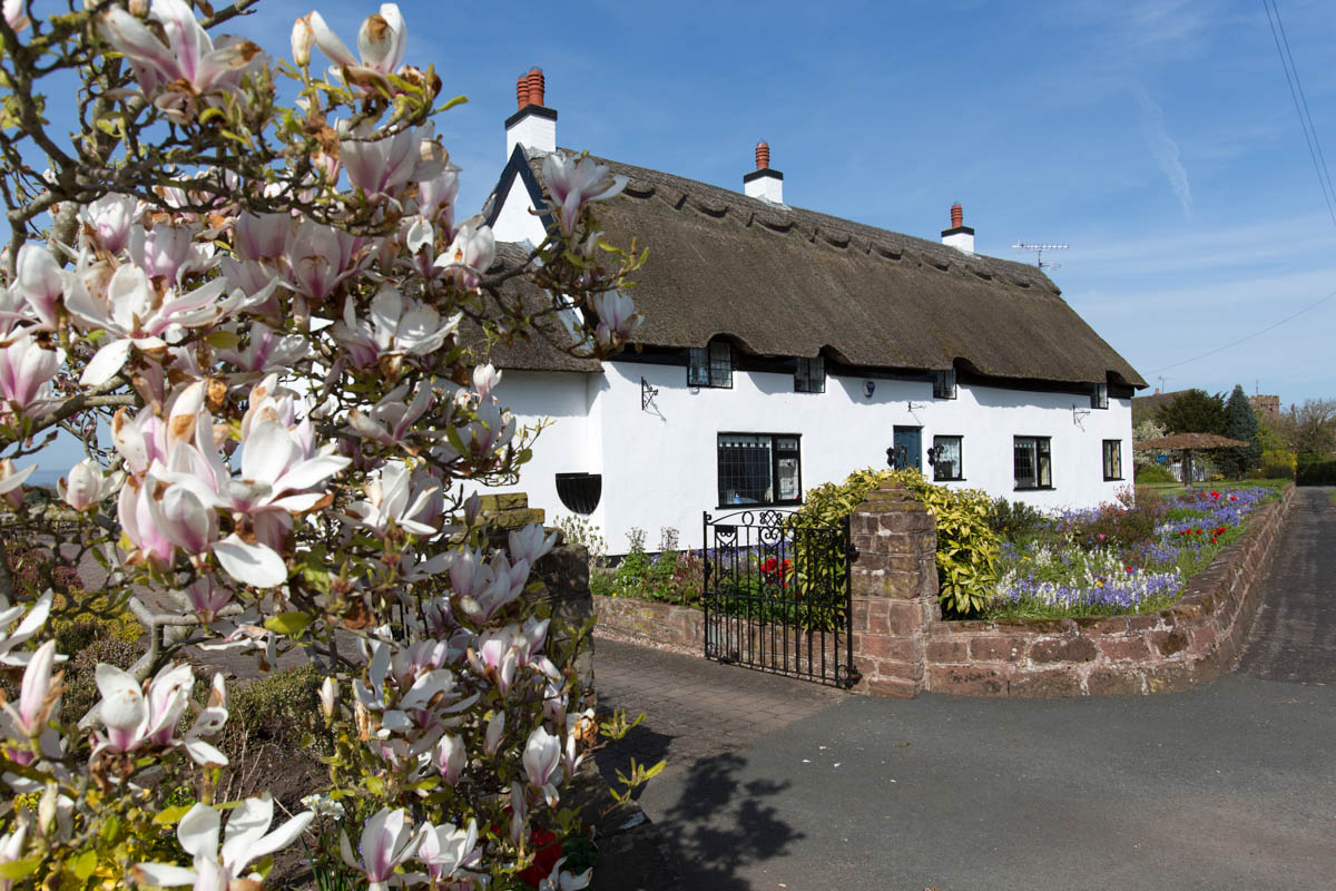 Picturesque spring view of a thatched cottage on Handley's main thoroughfare.