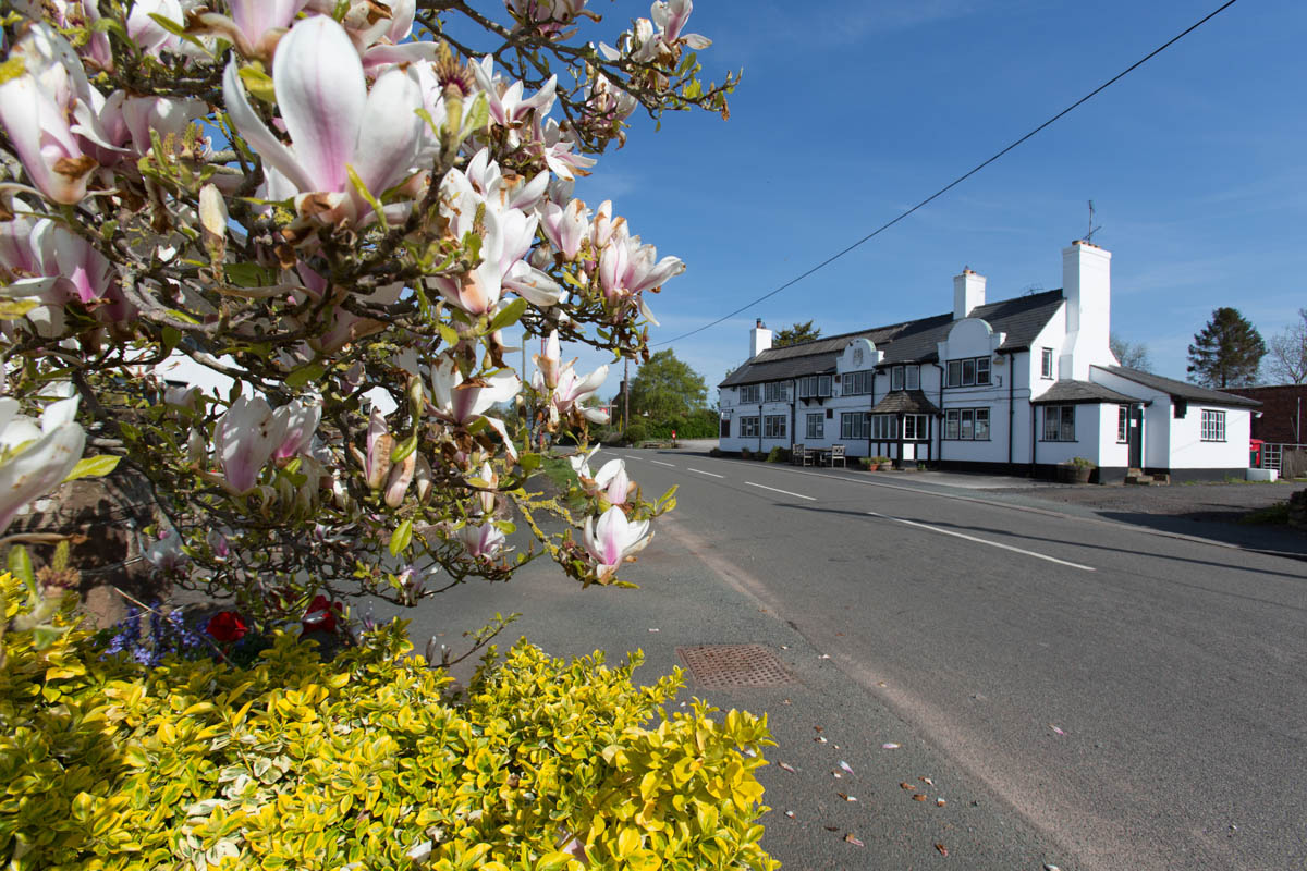 Picturesque spring view of Handley's main thoroughfare. The Calveley Arms restaurant and pub is on the right of the image.