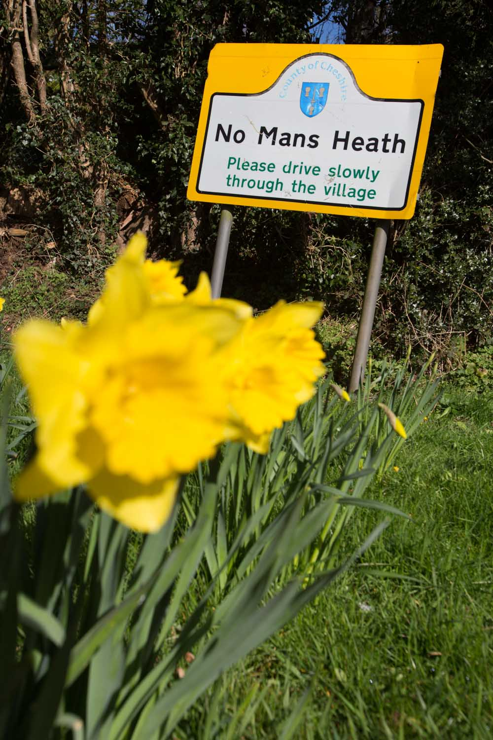 Picturesque spring view of daffodils in full bloom with No Man's Heath village sign in the background.