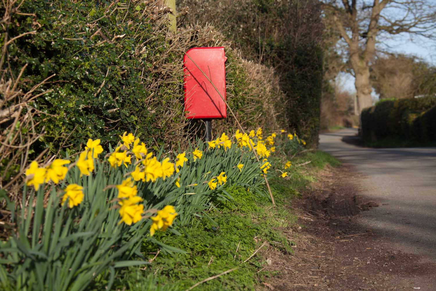 Picturesque spring view of a red post box on Brassey's Contract Road, in the Cheshire parish of Edge.